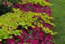 Landscaping Ideas / by Lisa Price