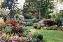 Garden / by Deann Mokler