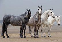 Custom Model Horses / by Alex Sievenpiper