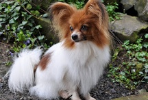 PAPILLON LUV / by Kay Droege