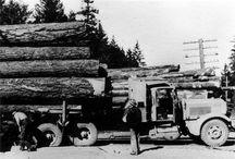 Logging / by Robert Thompson