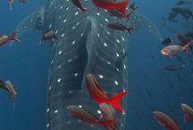 Sharks / by Susan Isenberg