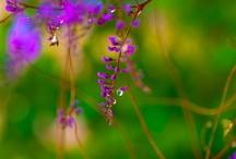 Violet Green / by Irene Thut-Bangerter
