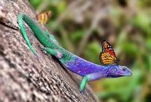 Nature's Jewels / by Paula McCleery