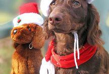 Christmas Dogs / by Joni Robbins