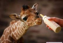 BABY ANIMALS / by Marianne Temming