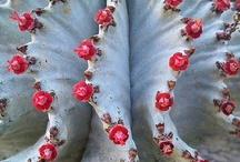 cactus / by maria r