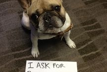 Dog shaming / by Sew Frizzell