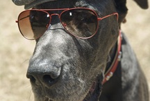 "Prestigious Puppy ""Hip"" / Our favorite Hipster Dogs / by Prestigious Puppy"