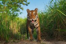 Animal Kingdom / by Sherri Romero