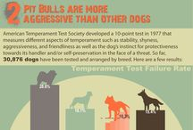 Dog Facts / by I Love Funny Dogs