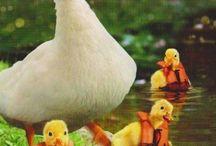 ^Ducks^ / by Joyce Sengewald
