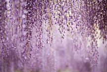 Purple and White / by Robin Hill