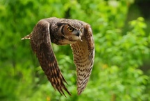 Owls / by Michael