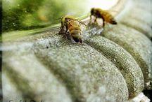 Honey Makers / by Gypsy Thread ~ Carey