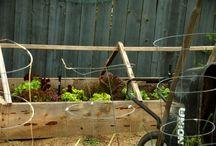 Gardening / by Stefanie McGill