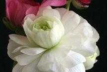 Flowers / by ryo