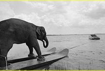 Elephants / by Camille Allan