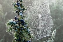 spiderwebs / by Karen Bedson/Westerberg