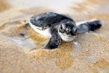 Cute Little Creatures / by Laura Bush