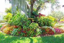 Garden / by Brig DM