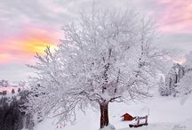 """Snow Serenity / Why would someone who grew up in sunny California love snow so much?  Maybe it's wanting what you don't have.  As an adult, I did live through six winters in Ohio so I have experienced the white stuff """"up close and personal"""" . . . and still love it.    / by Barb Smith"""