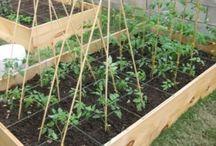 Garden Inspirations / by Backyard Farmer