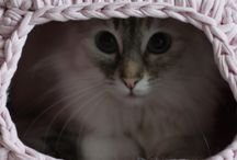 Angie's Pets Rule / All pets pictures, products or DIY. I love!! / by Angie Hernandez, Hypnotherapist
