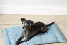 DIY Doggie  / by Kathie Volante