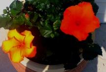 flowers / by Dugger Cop