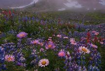 Home - Mt. Rainier, Buckley, Enumclaw / by Echo Symmons