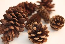 Pine cones and nature / by June Greiner Giossi