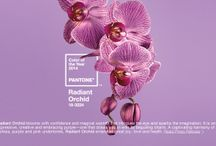 """Radiant Orchid"" Wedding / Pantone has named ""radiant orchid"" the 2014 color of the year! Check out our ideas for this purple-themed wedding. / by 123Print – Personalized Online Printing"