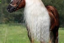 horses / by Dorothy Gerlach