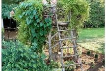 Garden / by Donna Perovich