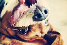 Basset hounds / by Ami Buschschulte Bullock
