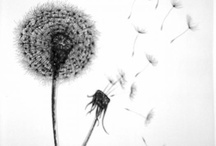 Dandelions / Saving images for future reference / by April Sproule