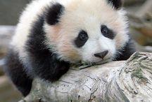 osos panda / by rosalesdhadas