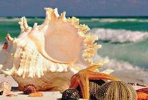 All Beach  / by Martita Mabel Miranda