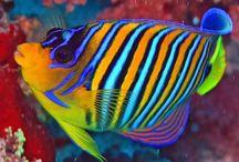 Under The Sea / Wanna Swim With Da Fish? / by Debbie