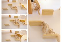 Cat / by Anca Ghita
