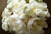 white weddings / by Saundra Hadley