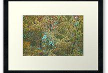 Landscape Beauty / by Kay Harrington Prints
