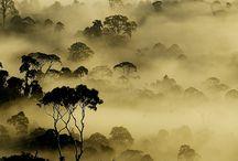 Desde la niebla... / by Angeles Roy