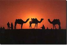 Sights of India / Exotic, beautiful places to visit in India / by Janaki Rao (Home From India)