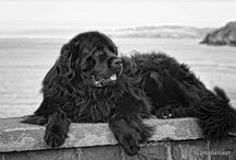 Puppies and Dogs / by Vanda Lavar