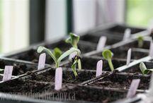 Gardening / by Darren Emery