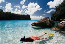 Explore the underwaterworld of Curaçao  / by Lions Dive & Beach Resort Curaçao