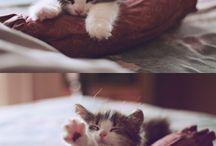 Cats / I love cats / by Edward James Herath