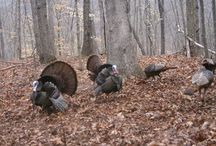 Hunting / Hunting news and events throughout North Carolina and South Carolina. / by Beach Carolina Magazine